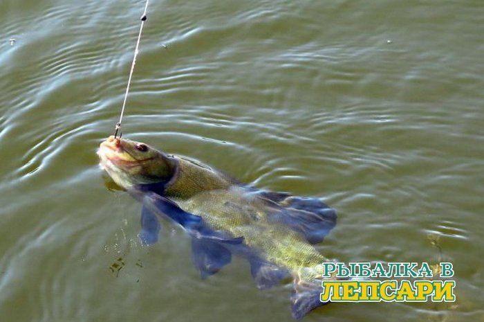 Как ловить линя в озере