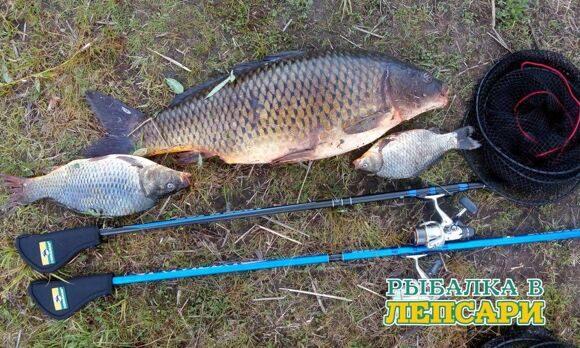 Ловля карпа на спиннинг - нестандартный подход к рыбалке